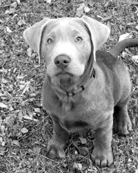 Hund_Lindaromano